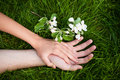 Hands Of Lovers On Grass Stock Image - 14479671