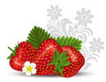 Strawberry With Flowers And  Leaves Stock Images - 14490824