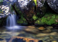 Flowing Water In Forest Royalty Free Stock Image - 14504656