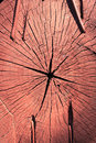 Patterns And Textures Of A Wood Slice Stock Image - 14519391