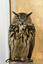 Owl Portrait Royalty Free Stock Photography - 14532417