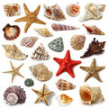 Seashell Collection Royalty Free Stock Photo - 14541685
