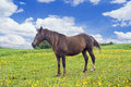 Horse On The Meadow Stock Photography - 14558142