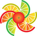 Grapefruit, Lemon, Lime And Orange Slices Stock Images - 14598254
