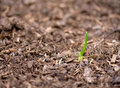 New Growth Royalty Free Stock Photography - 14607037