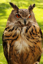 Watchful Owl Royalty Free Stock Photo - 14610515