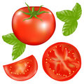 Tomato With Basil. Vector Royalty Free Stock Image - 14630546
