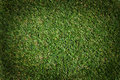 Green Grass Background Stock Image - 14641171
