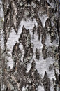 Old Rough Birch Bark Background Stock Images - 14653864