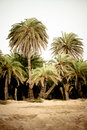 Palm Forest At Vai Stock Images - 14685794