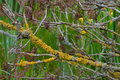 Lichen Royalty Free Stock Images - 14686349