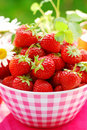 Bowl Of Fresh Strawberries Royalty Free Stock Photo - 14701265