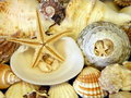 Shells And Stars Stock Photography - 14701602