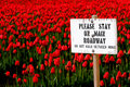 Stay On Main Roadway Sign With Red Tulip Field Stock Photography - 14774202