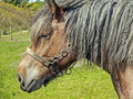 Old Horse Stock Images - 14785414