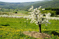 Blossoming Of The Apple Trees Stock Photography - 1481692