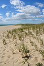 Dune With Beach Grass Royalty Free Stock Photography - 1482367