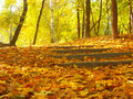 Fall In The Park Stock Images - 1484194