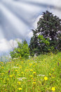 Flowery Meadow Stock Photography - 14803192