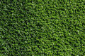 Green Wall Stock Photography - 14856182