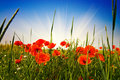 Wonderful Meadow By Summer. Royalty Free Stock Image - 14869586