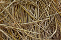 Metal Needle In Hay Royalty Free Stock Photo - 14879875