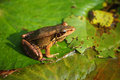 Little Frog Royalty Free Stock Image - 14908506