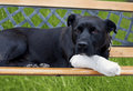 Dog With Broken Leg Royalty Free Stock Images - 14913179