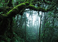 Tropical Rain Forest Royalty Free Stock Images - 14921189