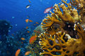 Coral Reef Stock Image - 14937151