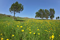 Soft Green Grass, Blooming Daisies Royalty Free Stock Image - 14963086