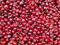 Cherries Royalty Free Stock Photos - 14983668
