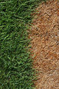 Brown And Green Grass Stock Photo - 14986150