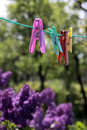 Clothespins Stock Images - 14989294