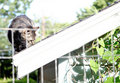 Cat On A Roof Stock Image - 14993201