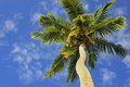 Coconut Palms Royalty Free Stock Images - 1508909