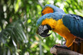 Macaw Parrot With Yellow And Blue Feathers Stock Photos - 15008013