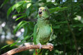 Parrot Or Macaw With Green And Yellow Feathers Stock Photography - 15008202