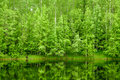 Forest Background Stock Images - 15022634