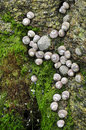 Shellfish On Rock At Low Tide Royalty Free Stock Photo - 15045535