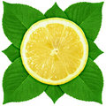 Single Cross Section Of Lemon With Green Leaf Royalty Free Stock Image - 15049356