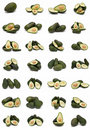 Avocados Collection. Royalty Free Stock Photography - 15054747