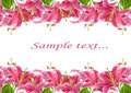 Frame Of Pink Lilies Stock Image - 15082131