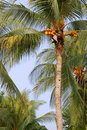 Coconut Palms Stock Photography - 1519102