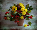Still Life With A Wild Ash And Chrysanthemums Royalty Free Stock Images - 15170279