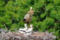 Stork With Its Baby Bird Royalty Free Stock Photos - 15198388
