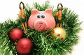 Year A Pig Stock Photo - 1522750