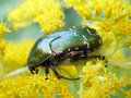 Bug Stock Images - 1526364