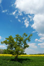 Lone Tree In A Field Stock Photography - 1529742