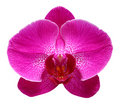 Purple Orchid Stock Images - 15214334